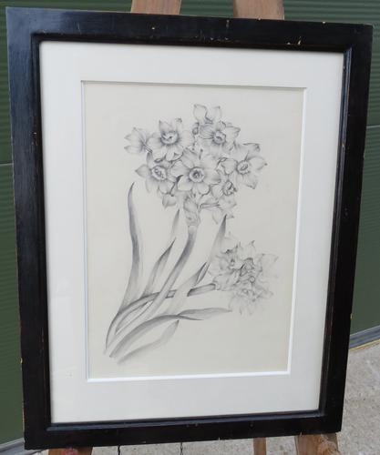 Antique Framed Pencil Drawing Picture of Daffodils (1 of 6)