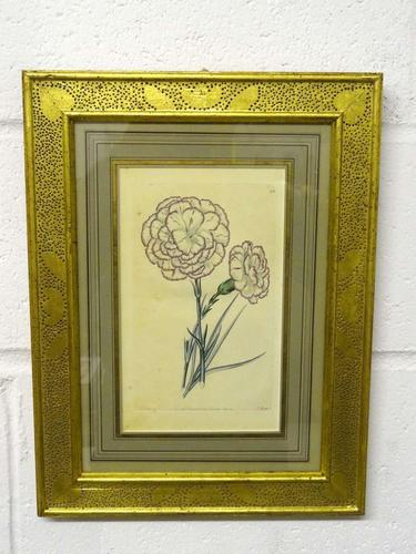 Botanical Print, Hand Coloured Engraving, Sidney Watts c.1820s (1 of 7)