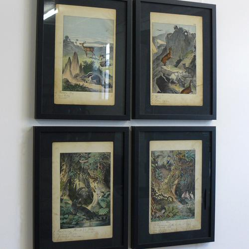 4 Framed Animal Coloured Pictures Plates c.1877 Sketches from Nature (1 of 8)