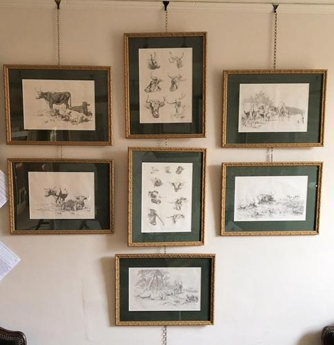 Rare Set of Seven Cattle Lithographs 1805/1806 (1 of 1)