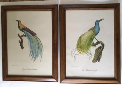 After Louis Piere Vieillot Set of Four Birds of Paradise Lithographs (1 of 1)