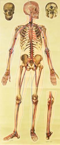 Medical Anatomical Wall Chart (1 of 1)