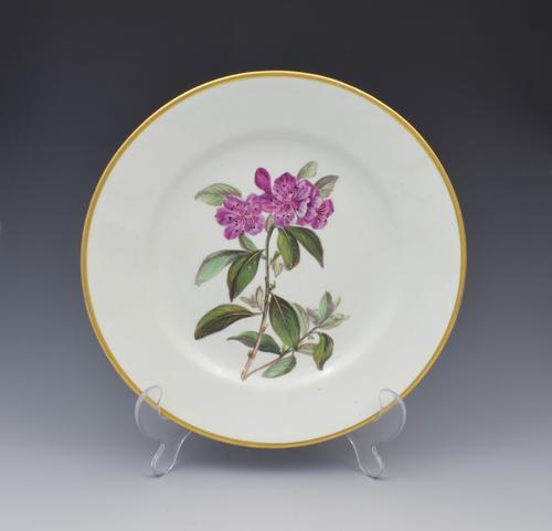 Derby Porcelain Botanical Dessert Plate Siberian Rhododendron C.1806 (1 of 7)