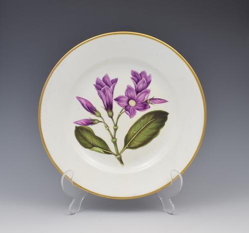 Derby Porcelain Botanical Dessert Plate Cryptostegia C.1806 (1 of 8)
