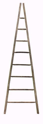 19th Century Elm Apple Picking Ladder (1 of 1)