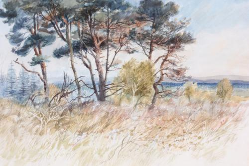 Towards the South Downs, Ashdown Forest, Signed: Clifford Bayly (1 of 1)