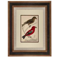 Hand Coloured 'Crimson Exotic Bird' Lithograph. Goldsmith 1875 (4 of 4)