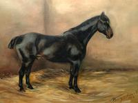 Oil Painting Portrait Study Black Horse in Stable Signed Alice Mary Burton RBA '1893-1968' (5 of 26)