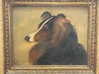 Pair of Scottish 19th Century Oil Paintings Rough Collie Dog Portraits After George Washington Brownlow (25 of 49)