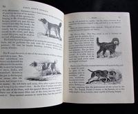 1838 Tales About Animals & Universal History by Peter Parley (3 of 5)