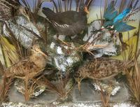 Taxidermy Edwardian Case of 7 Birds Inc: Kingfisher, Snipe, Moorhen & Woodcock (7 of 15)