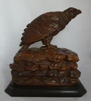 Rare and beautiful carving of a young eagle, 19th century (2 of 6)