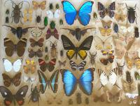 Antique Specimen Butterfly & Insect Case (2 of 8)