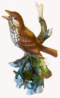 A Porcelain Figure of a Woodthrush, Andrea by Sardek (3 of 7)