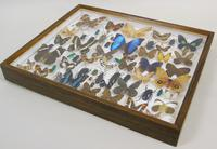 Good Antique Butterfly & Insect Specimens Collection (7 of 8)