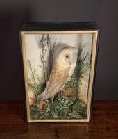 Decorative Cased Taxidermy Barn Owl (2 of 10)