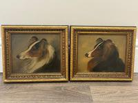 Pair of Scottish 19th Century Oil Paintings Rough Collie Dog Portraits After George Washington Brownlow (46 of 49)