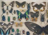 Antique Insect and Butterfly Specimens Collection (4 of 7)