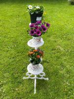 Victorian 19th Century Garden Cast Iron Painted White 6 Branch Plant Stand (5 of 47)