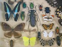 Antique Insect and Butterfly Specimens Collection (7 of 7)