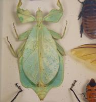 Fabulous Antique Collection Cased Butterfly & Insect Specimens (6 of 8)
