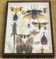 Fabulous Antique Collection Cased Insect & Butterfly Specimens (3 of 7)