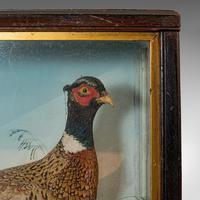 Antique Taxidermy Scene, Birds, Pheasant, Blackbird, Display Case, Victorian (9 of 10)