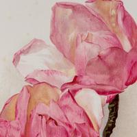 Sublime & Romantic Magnolias Chromolithograph 1903