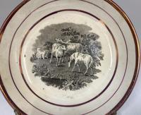 Antique Regency Period Porcelain Saucer c.1815 (3 of 3)