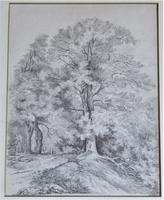 Emma Weeds Bacon, Suffolk, Study of an Oak Tree, Pencil, Initialled & Dated 1822, Framed (2 of 8)