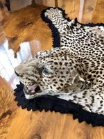 Antique Leopard Skin Rug Taxidermy by Peter Spicer (3 of 18)