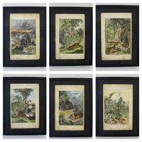 6 Framed Animal Coloured Pictures Plates C1877 Sketches from Nature - N America & Canada (2 of 12)