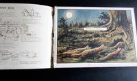 Larder Lodge Verse by B Parker, Illustrated Children's Book.  1900 (5 of 6)