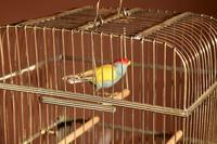 Brass Very Decorative Bird Cage c.1920 (4 of 8)