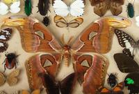 Large Antique Specimen Butterfly & Insect Case (10 of 10)