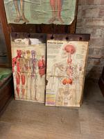 1910 Anatomical Medical Figure (7 of 9)