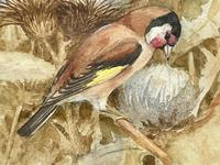 Ornithological Watercolour Finches Birds Study by Florence Barlow Royal Doulton (5 of 40)