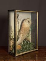 Decorative Cased Taxidermy Barn Owl (7 of 10)