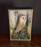 Decorative Cased Taxidermy Barn Owl (5 of 10)