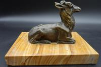 Well Modelled Early 20th Century Continental Bronze Model of a Recumbent Goat (6 of 6)