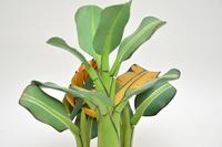 Vintage South Amercian Carved Wood Banana Tree Sculpture (10 of 10)