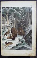 6 Framed Animal Coloured Pictures Plates C1877 Sketches From Nature - N Europe & Lapland (5 of 11)