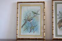 Set of Three Early 20th Century Silk Bird Paintings (4 of 10)