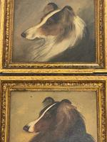 Pair of Scottish 19th Century Oil Paintings Rough Collie Dog Portraits After George Washington Brownlow (7 of 49)