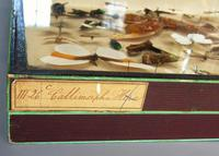 Large Antique Specimen Butterfly & Insect Case (8 of 10)