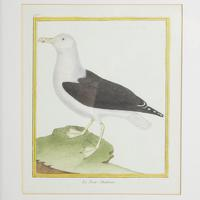 Set of Twelve Bird Hand Coloured Engravings by Martinet (4 of 5)