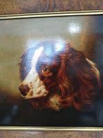 Portrait of a Spaniel (2 of 4)