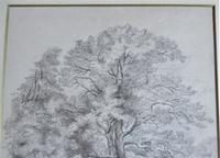 Emma Weeds Bacon, Suffolk, Study of an Oak Tree, Pencil, Initialled & Dated 1822, Framed (4 of 8)