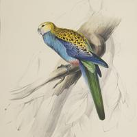 Set of Four 19th Century Bird Lithographs by Edward Lear (3 of 5)