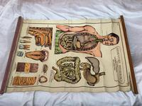 Vintage Medical Anatomical Elementary Physiology Chart Poster Early Arnold No 5 (15 of 19)